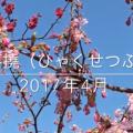百折不撓(ひゃくせつふとう)2017年4月セミナーテーマ(動画付)