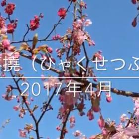 スクリーンショット 2017-04-01 00.01.34